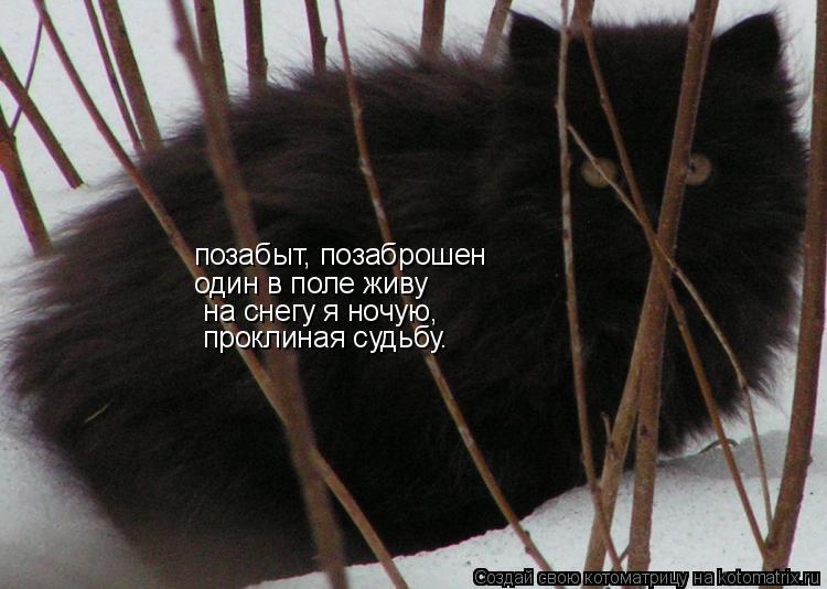 Котоматрица: позабыт, позаброшен позабыт, позаброшен один в поле живу  на снегу я ночую,  проклиная судьбу.