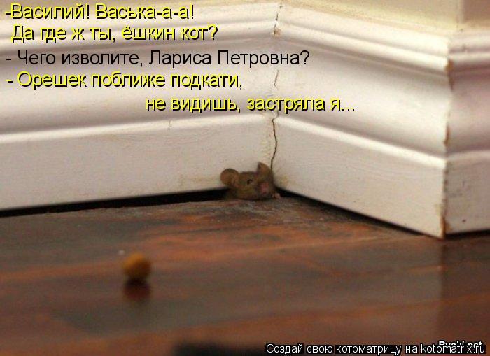 Котоматрица: -Василий! Васька-а-а! Да где ж ты, ёшкин кот? - Чего изволите, Лариса Петровна? - Орешек поближе подкати,  не видишь, застряла я...
