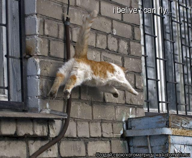 Котоматрица: i belive i can fly...