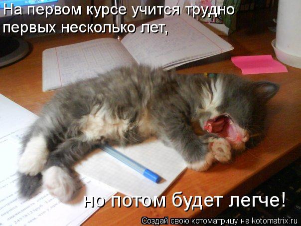 Котоматрица: На первом курсе учится трудно  первых несколько лет,  но потом будет легче!