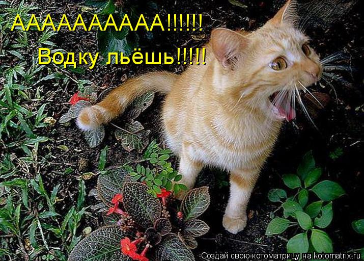 Котоматрица: АААААААААА!!!!!! Водку льёшь!!!!!