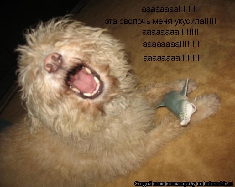 Котоматрица: аааааааа!!!!!!!! эта сволочь меня укусила!!!!! аааааааа!!!!!!!! аааааааа!!!!!!!! аааааааа!!!!!!!!