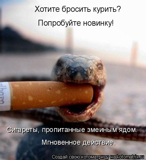 Котоматрица: Хотите бросить курить? Попробуйте новинку!  Сигареты, пропитанные змеиным ядом. Мгновенное действие.