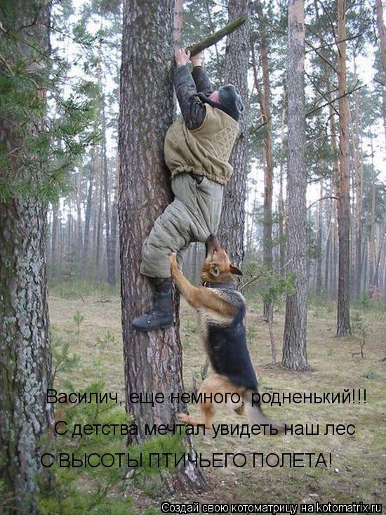 Котоматрица: С детства мечтал увидеть наш лес  С ВЫСОТЫ ПТИЧЬЕГО ПОЛЕТА! Василич, еще немного, родненький!!!