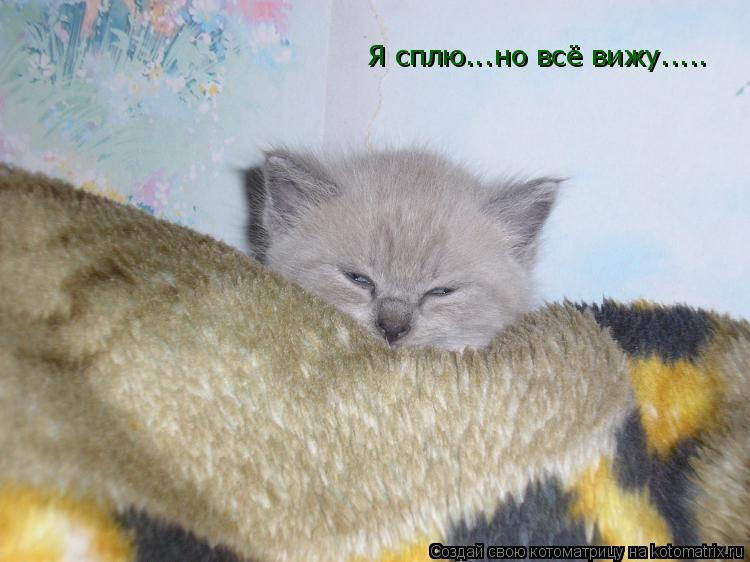 Котоматрица: Я сплю...но всё вижу.....