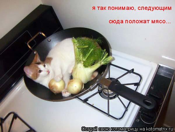 Котоматрица: я так понимаю, следующим  сюда положат мясо...