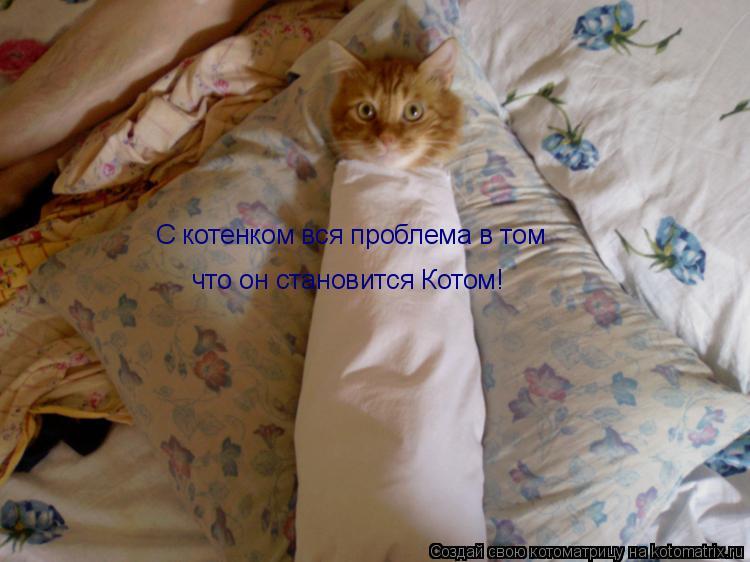 Котоматрица: С котенком вся проблема в том что он становится Котом!