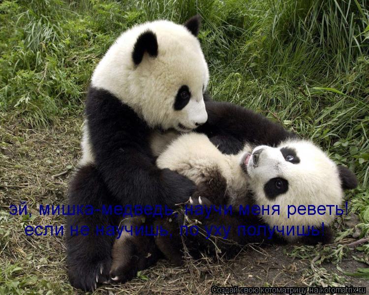 Котоматрица: эй, мишка-медведь, научи меня реветь! если не научишь, по уху получишь!