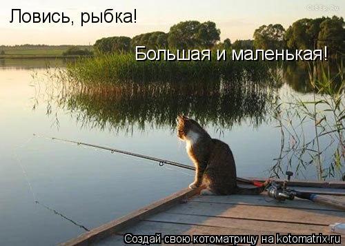 Котоматрица: Ловись, рыбка! Большая и маленькая!