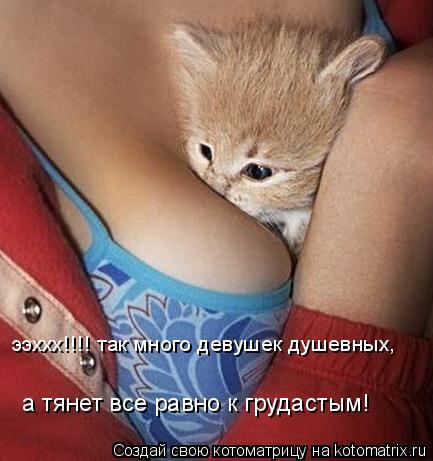 Котоматрица: ээххх!!!! так много девушек душевных, а тянет все равно к грудастым!