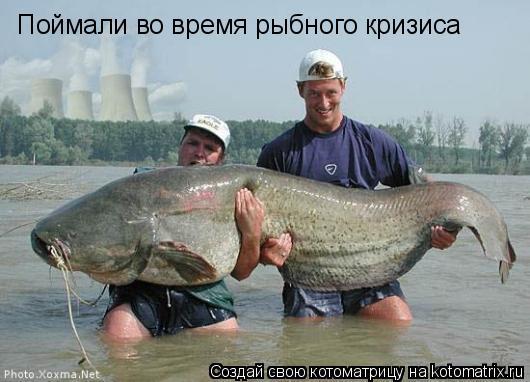 Котоматрица: Поймали во время рыбного кризиса