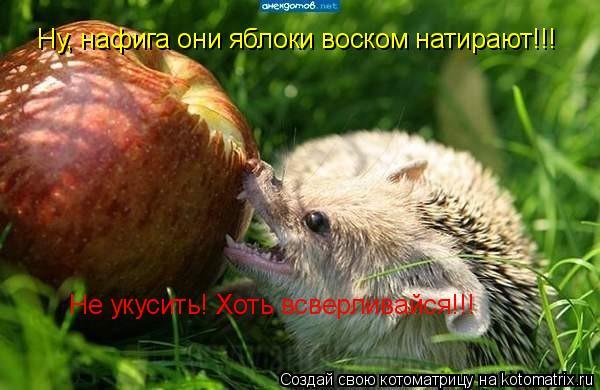 Котоматрица: Ну, нафига они яблоки воском натирают!!! Не укусить! Хоть всверливайся!!!