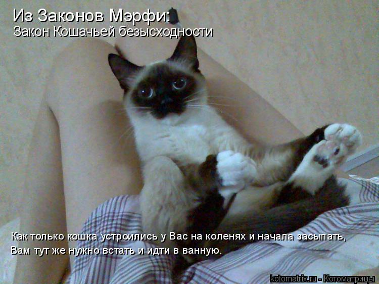 Котоматрица: Из Законов Мэрфи: Закон Кошачьей безысходности Как только кошка устроились у Вас на коленях и начала засыпать, Вам тут же нужно встать и идт