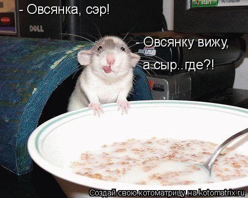 Котоматрица: - Овсянка, сэр! - Овсянку вижу,  а сыр..где?!