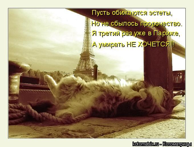 Котоматрица: Пусть обижаются эстеты, Я третий раз уже в Париже, Но не сбылось пророчество. А умирать НЕ ХОЧЕТСЯ!!