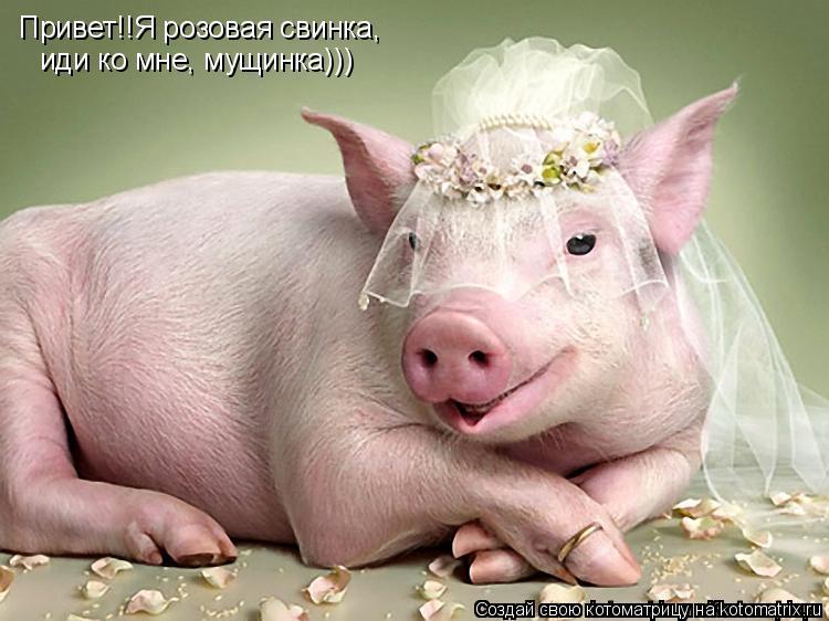 Котоматрица: Привет!!Я розовая свинка, иди ко мне, мущинка)))