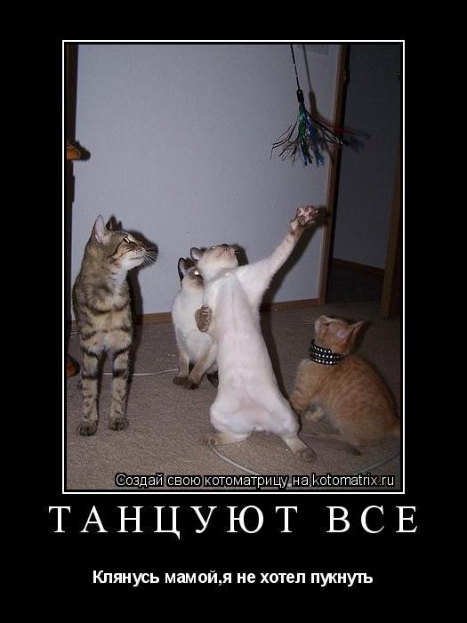 Котоматрица: Танцуют все Клянусь мамой,я не хотел пукнуть