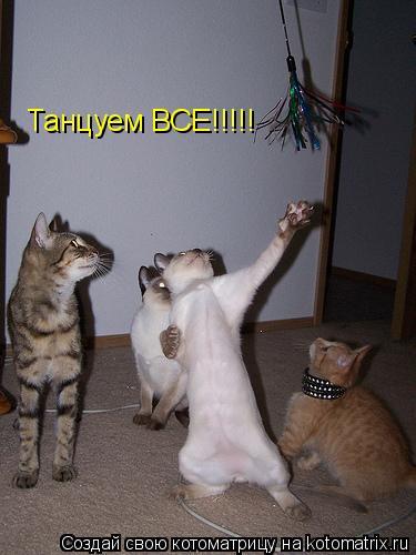 Котоматрица: Танцуем ВСЕ!!!!!
