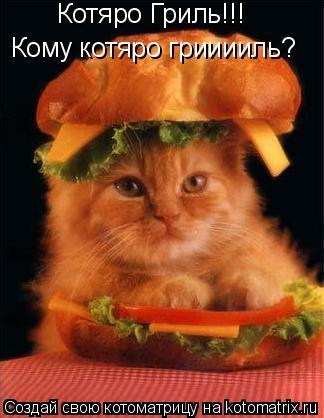 Котоматрица: Котяро Гриль!!! Кому котяро грииииль?