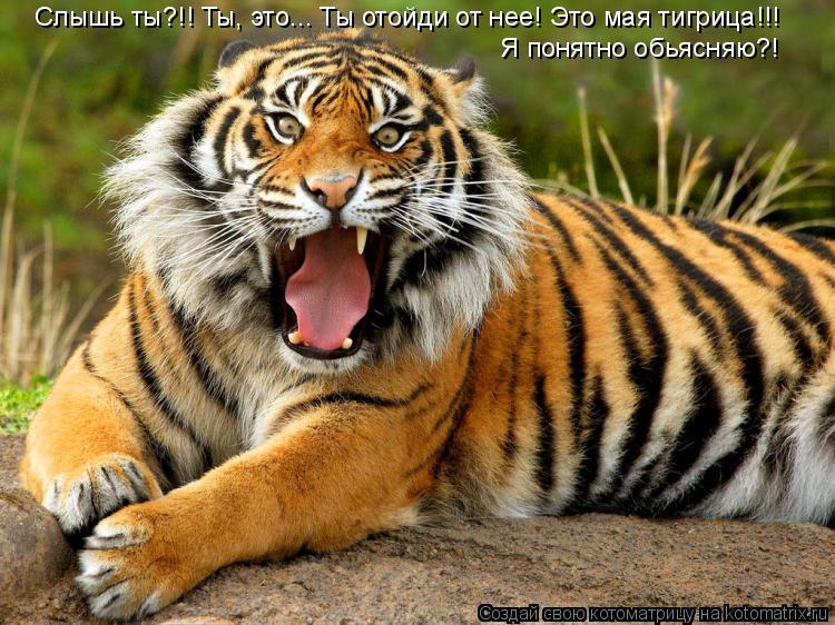 Котоматрица: Слышь ты?!! Ты, это... Ты отойди от нее! Это мая тигрица!!! Я понятно обьясняю?!