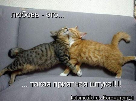 Котоматрица: любовь - это...  ... такая приятная штука!!!!