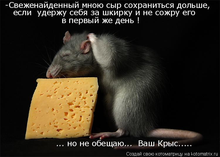 Котоматрица: -Свеженайденный мною сыр сохраниться дольше, если  удержу себя за шкирку и не сожру его в первый же день ! ... но не обещаю...  Ваш Крыс.....