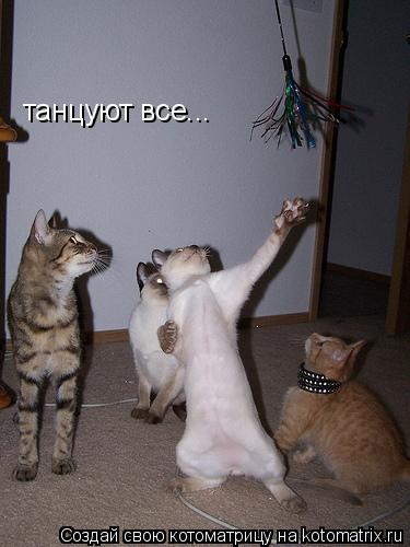 Котоматрица: танцуют все...