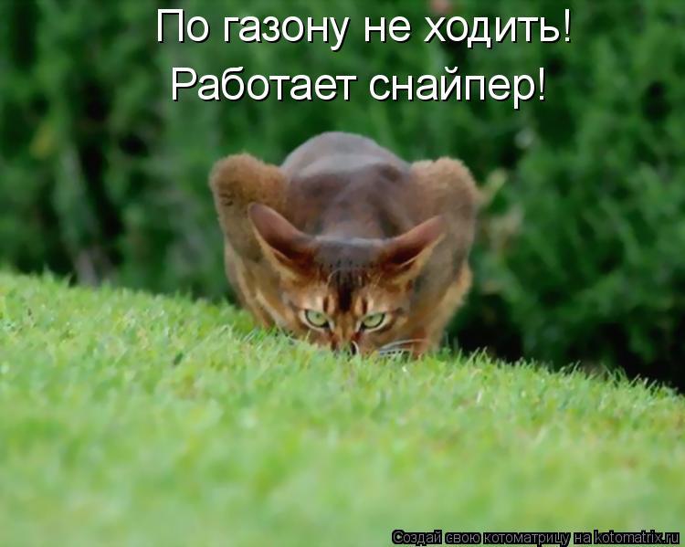 Котоматрица: По газону не ходить! Работает снайпер!