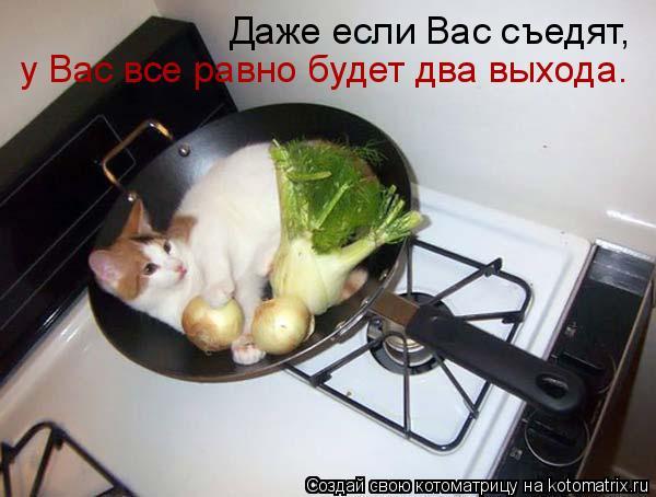 Котоматрица: Даже если Вас съедят,  у Вас все равно будет два выхода…