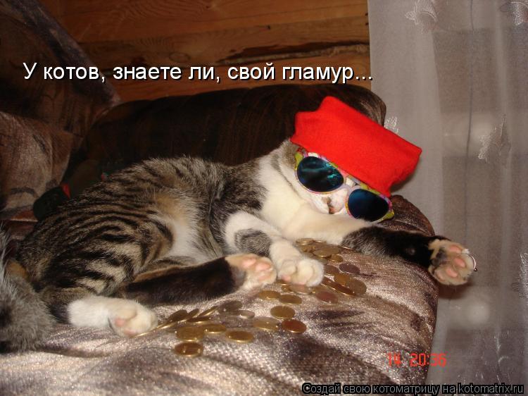 Котоматрица: У котов, знаете ли, свой гламур...