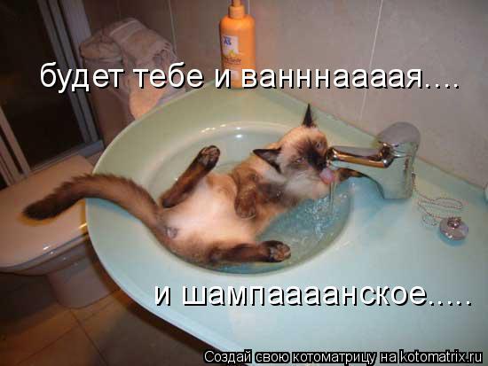 Котоматрица: будет тебе и ванннаааая.... и шампаааанское.....
