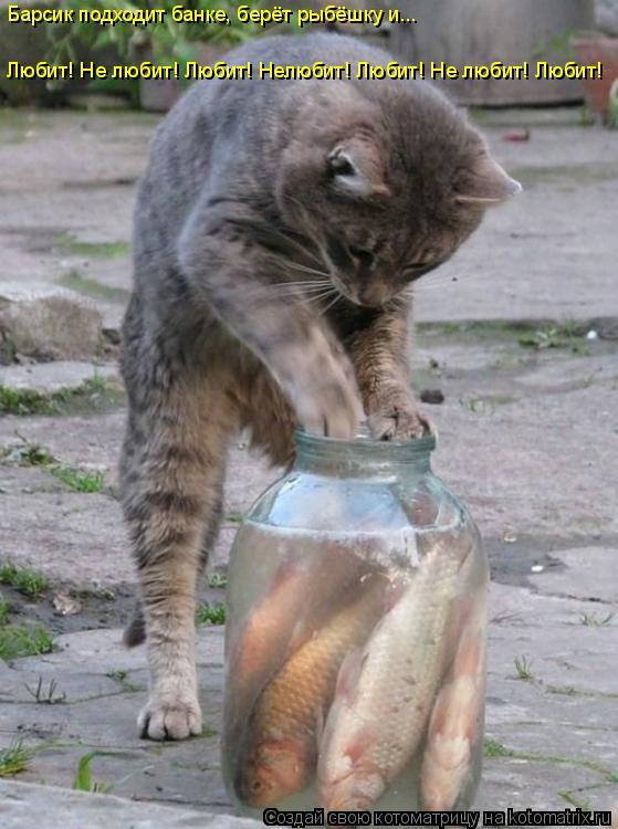 Котоматрица: Барсик подходит банке, берёт рыбёшку и... Любит! Не любит! Любит! Нелюбит! Любит! Не любит! Любит!