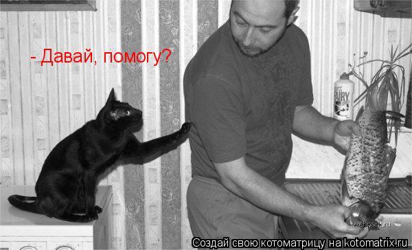 Котоматрица: - Давай, помогу?