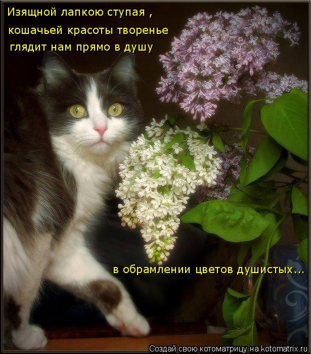 Котоматрица: Изящной лапкою ступая , кошачьей красоты творенье глядит нам прямо в душу в обрамлении цветов душистых...