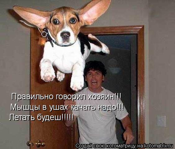 Котоматрица: Правильно говорил хозяин!!! Мышцы в ушах качать надо!!! Летать будеш!!!!!