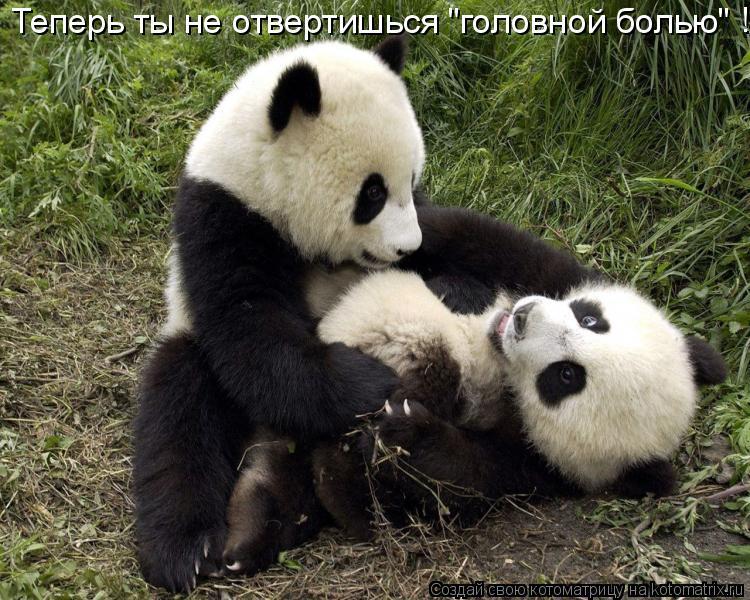 """Котоматрица: Теперь ты не отвертишься """"головной болью""""   ! ! !"""