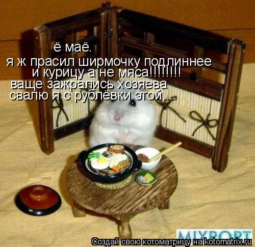 Котоматрица: ё маё. я ж прасил ширмочку подлиннее  и курицу а не мяса!!!!!!!!  ваще зажрались хозяева свалю я с рублёвки этой....