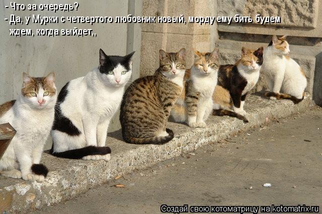 Котоматрица: - Что за очередь? - Да, у Мурки с четвертого любовник новый, морду ему бить будем ждем, когда выйдет,,