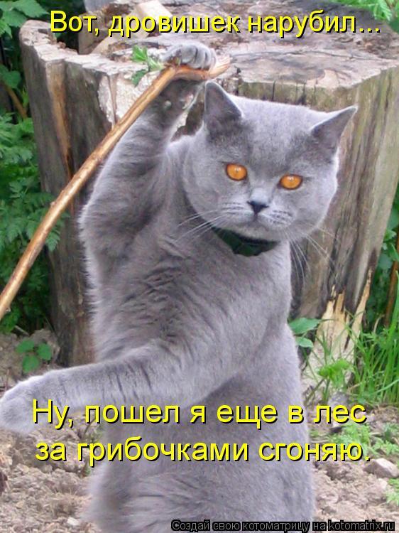 Котоматрица: Вот, дровишек нарубил... Ну, пошел я еще в лес  за грибочками сгоняю.