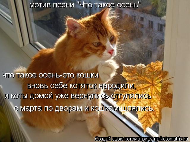 """Котоматрица: мотив песни """"Что такое осень"""" что такое осень-это кошки вновь себе котяток народили, и коты домой уже вернулись-отгулялись с марта по дворам"""