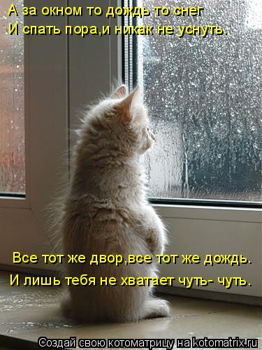 Котоматрица: А за окном то дождь то снег Все тот же двор,все тот же дождь. И лишь тебя не хватает чуть- чуть. И спать пора,и никак не уснуть.