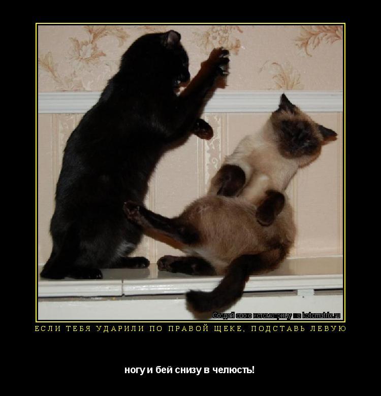 Котоматрица: Если тебя ударили по правой щеке, подставь левую ногу и бей снизу в челюсть!