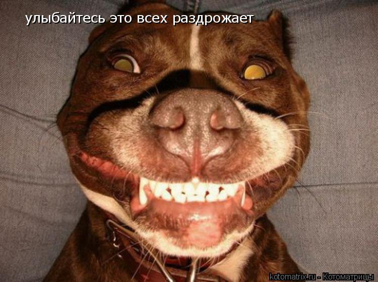 Котоматрица: улыбайтесь это всех раздрожает