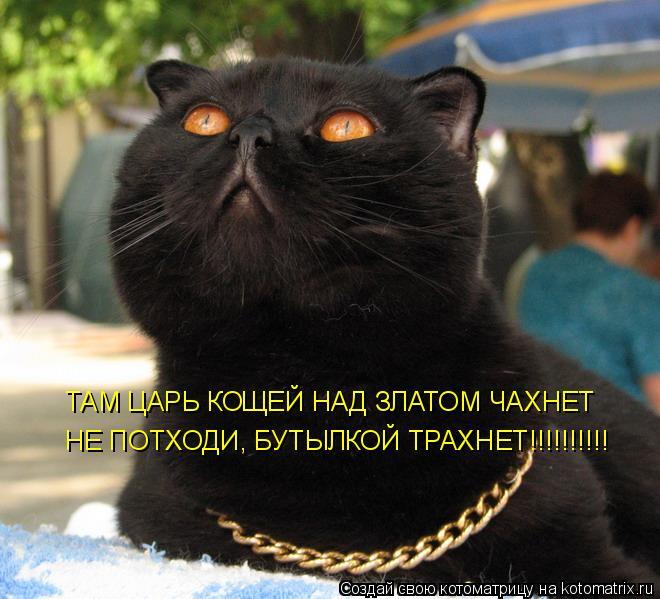 Котоматрица: ТАМ ЦАРЬ КОЩЕЙ НАД ЗЛАТОМ ЧАХНЕТ НЕ ПОТХОДИ, БУТЫЛКОЙ ТРАХНЕТ!!!!!!!!!!