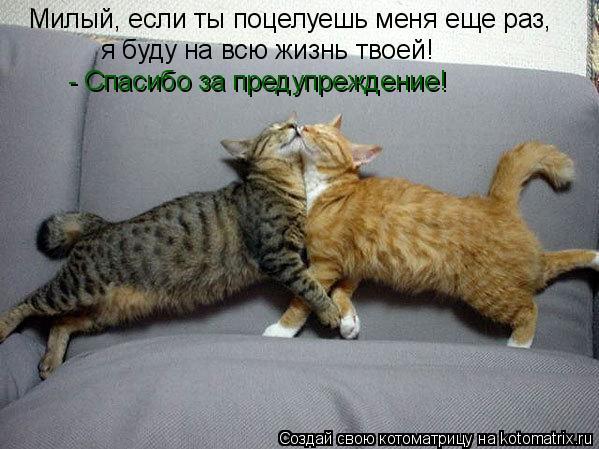 Котоматрица: Милый, если ты поцелуешь меня еще раз, я буду на всю жизнь твоей! - Спасибо за предупреждение!
