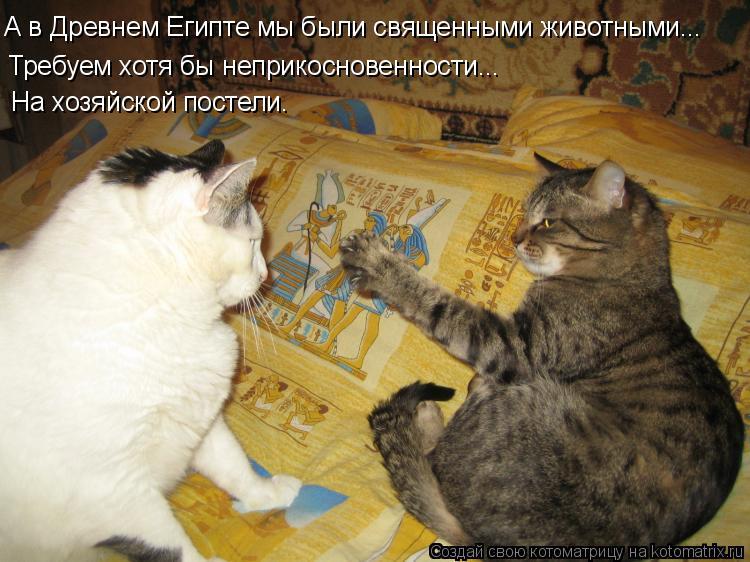 Котоматрица: А в Древнем Египте мы были священными животными... Требуем хотя бы неприкосновенности...  На хозяйской постели.