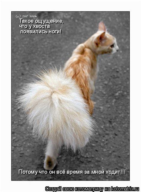 Котоматрица: Такое ощущение,  что у хвоста  появились ноги! Потому что он всё время за мной ходит!!!