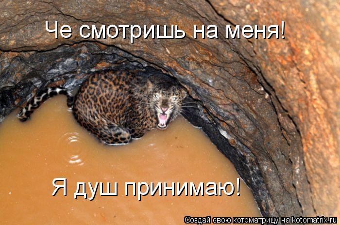 Котоматрица: Че смотришь на меня! Я душ принимаю!