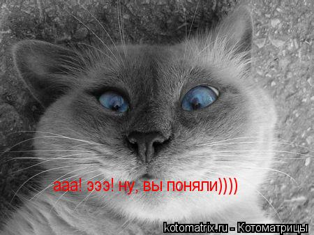 Котоматрица: ааа! эээ! ну, вы поняли))))