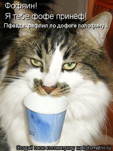 Котоматрица: Фофяин! Я тебе фофе принёф! Пфавда, рафлил по дофоге полофину...